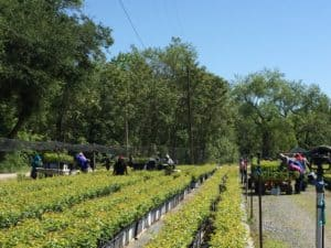 Agricultural Labor in the United States: Current Situation & Threats