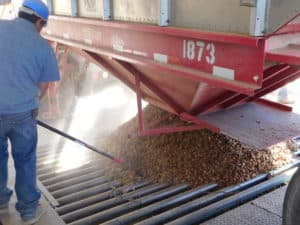 Almond Processing: Pre-Cleaning, Hulling & Processing | The